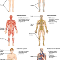 102_Organ_Systems_of_Body(Page1).jpg
