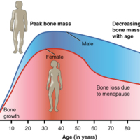 Graph Showing Relationship Between Age and Bone Mass.jpg