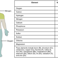 Elements of the Human Body.jpg