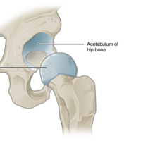 Multiaxial Joint.jpg