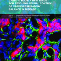 Carotid Body: A New Target for Rescuing Neural Control of Cardiorespiratory Balance in Disease